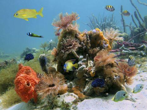 635723820724042635-ESY-002629228---Underwater-scene-Cocos-Island